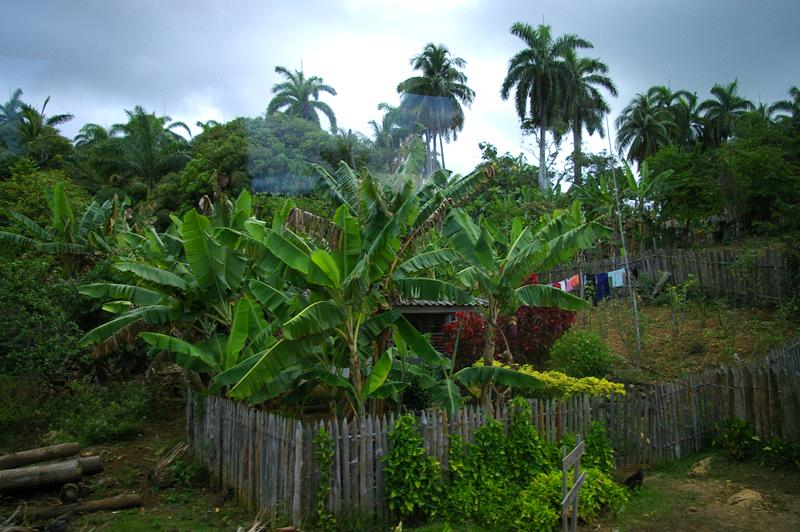 vegetation-cuba